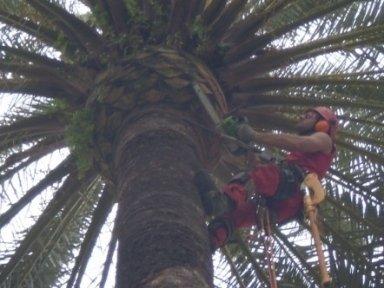 Lavori di manutenzione palma