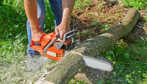 Safe tree care and removal in Lincoln, NE