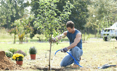 Man replanting a tree after stump grinding removal services in Lincoln, NE