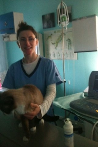 assistente veterinario