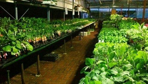 Coltivazione piante verdi in vaso