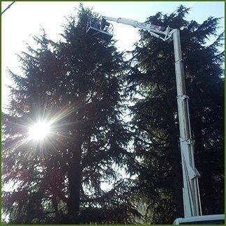 potatura in tree-climbing