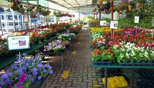Vasellame concorezzo mb little garden lanfranchi for Little garden imports
