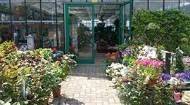 serra piante