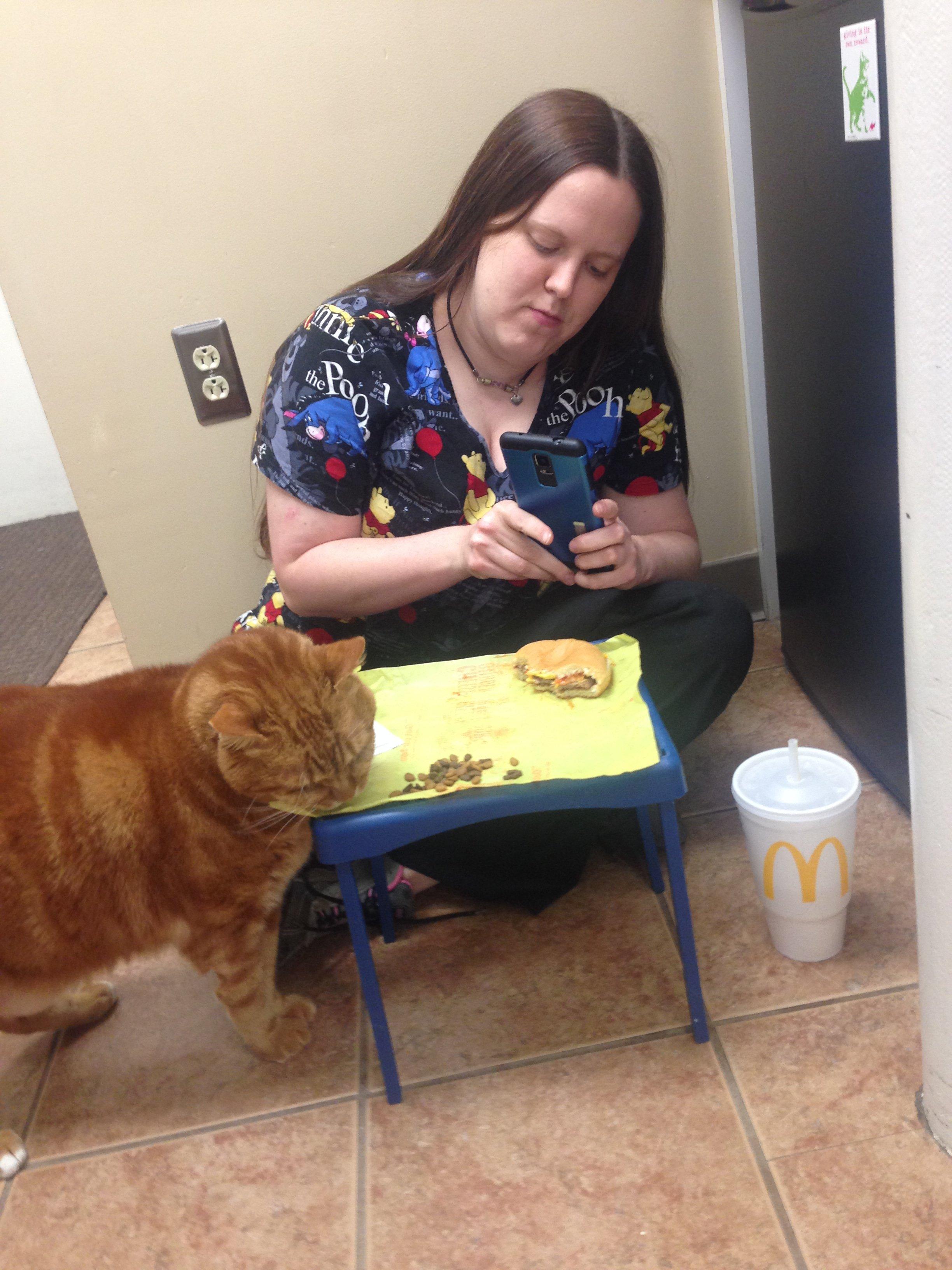 cat eating cat food