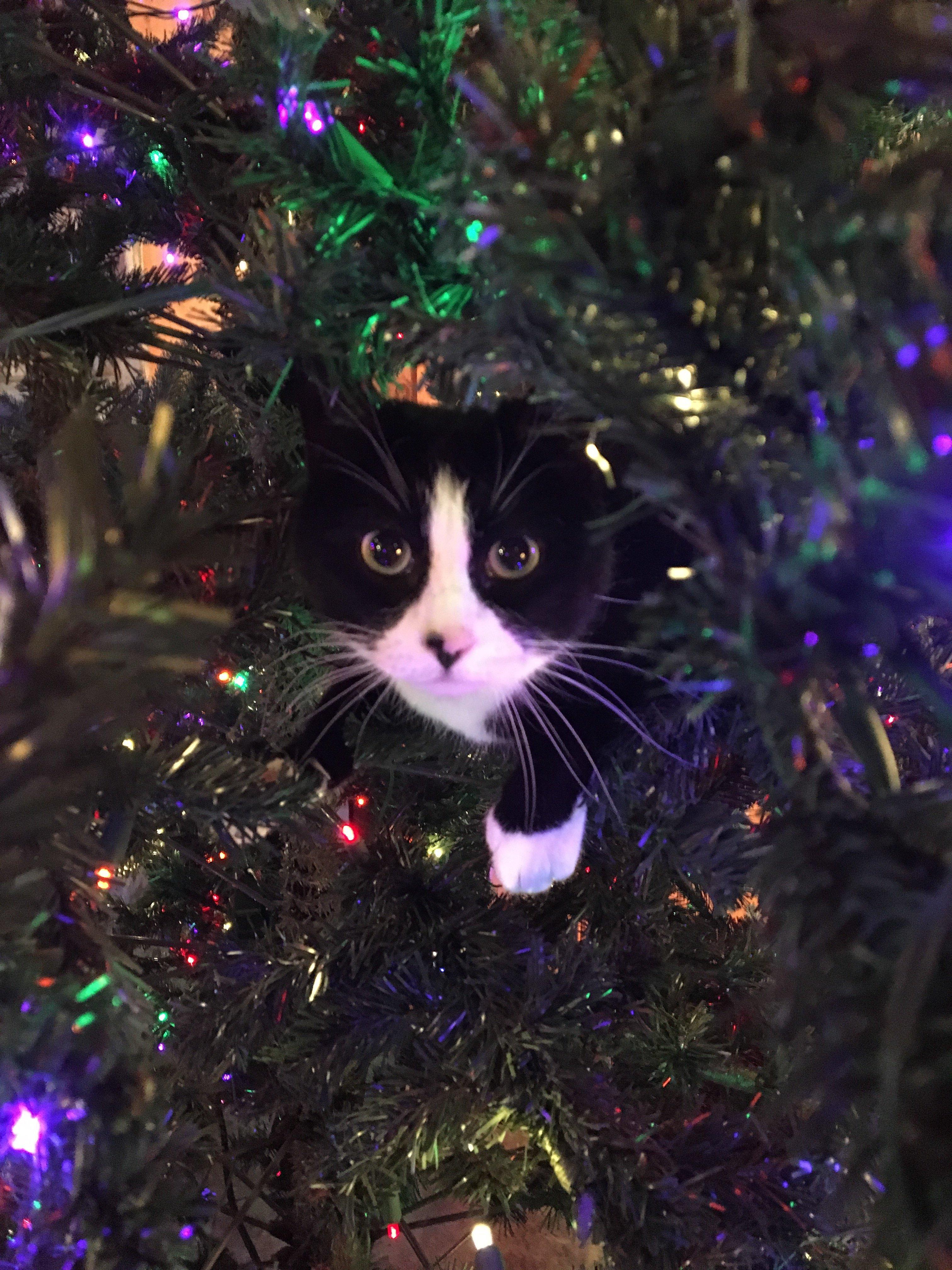 cat inside of christmas tree