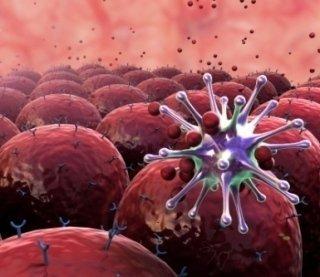immunologo