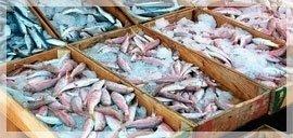 piatti ittici