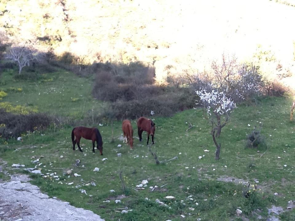 i cavalli