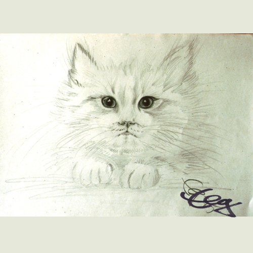 Bild Zeichnung Katze (1) Bleistift auf Papier Goßner