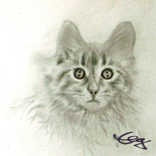 Bild Zeichnung Katze Bleistift auf Papier Goßner