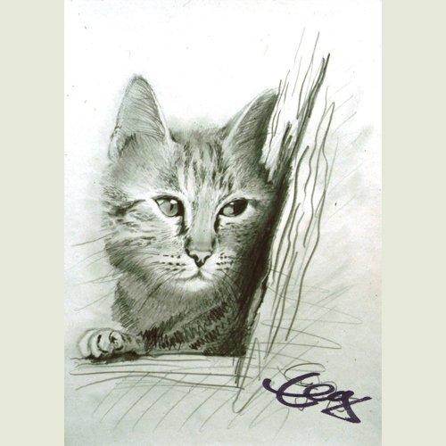 Katze Bleistiftzeichnung Goßner