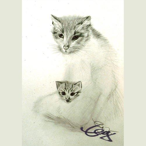 Bild Katzen Zeichnung Bleistift Papier Goßner