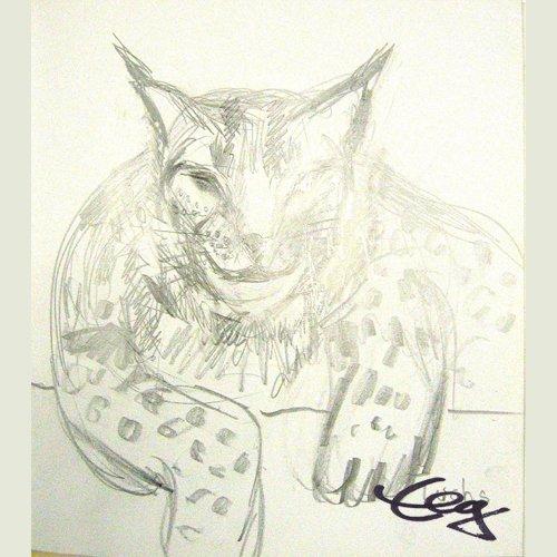 Katze Luchs Zeichnung Ernicke