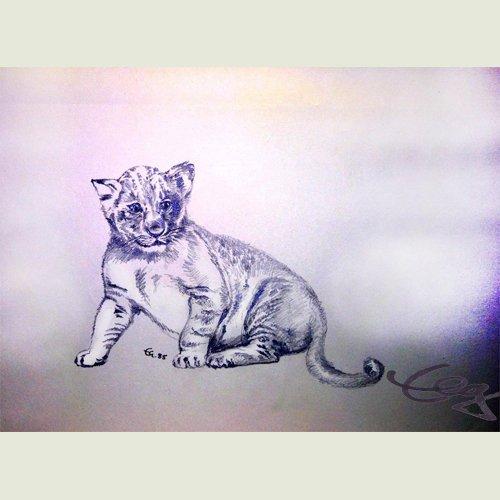 Zeichnung junge Katze Löwe Bleistift auf Papier Ernicke