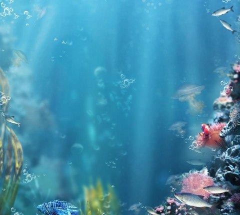 vendita pesci tropicali