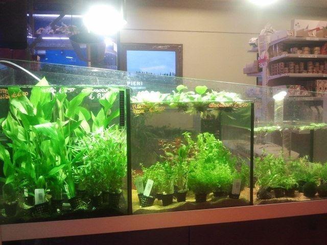 piante per acquari