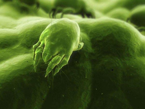 disinfezione ambienti