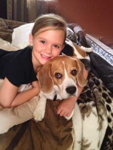 Beagle with young girl
