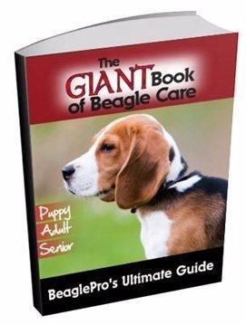 The Giant Book of Beagle Care