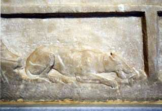 ancient Greek dog