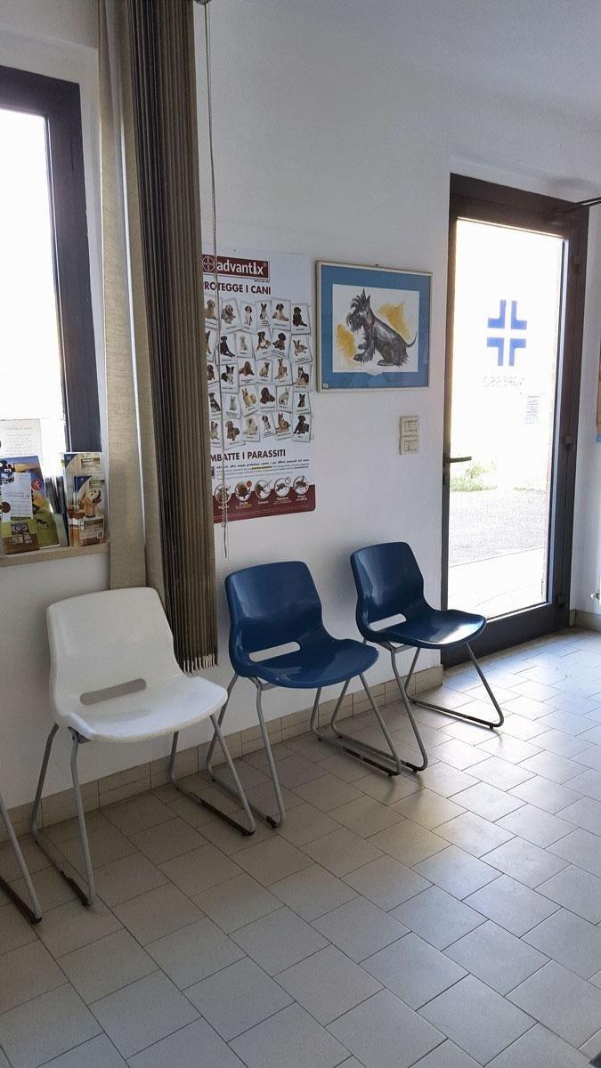 interno clinica veterinaria