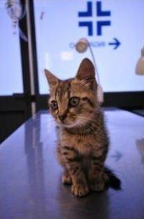 gattino in clinica veterinaria