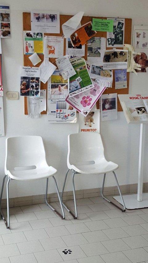 sala d'attesa di una clinica veterinaria