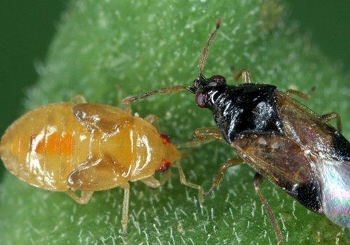 Due insetti
