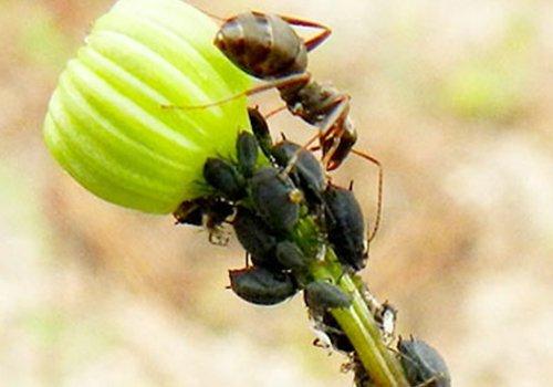 Degli insetti su uno stelo di un fiore