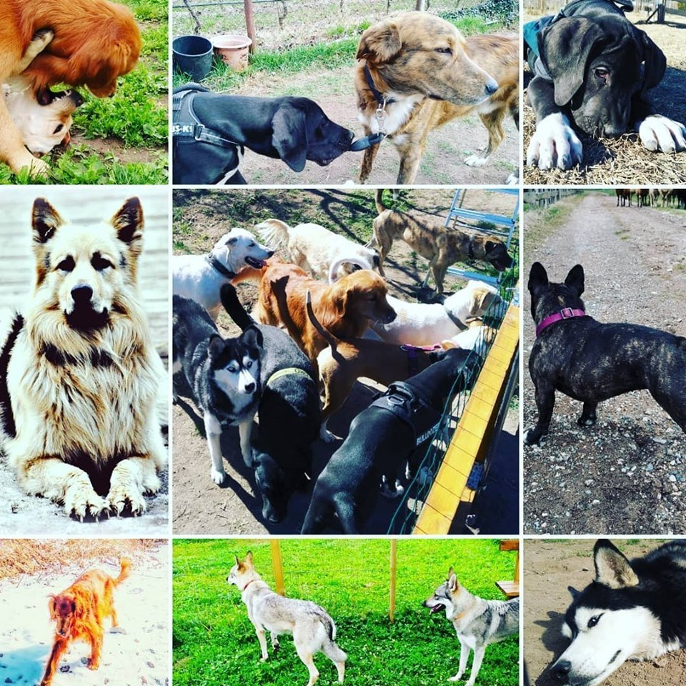 Centro Cinofilo Europeo Novate Milanese.Il Team All Breeds Centro Cinofilo