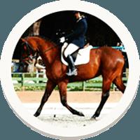 cavalli-sportivi