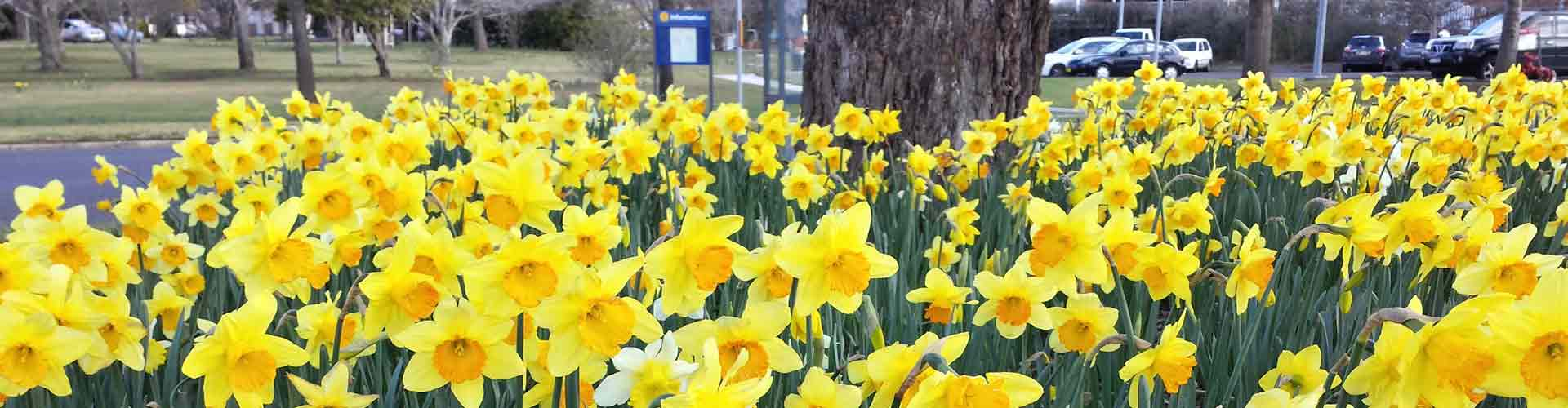 spring-bowral