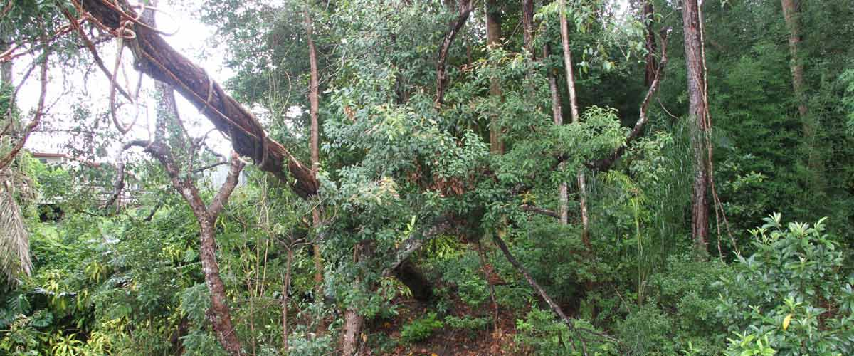steve smith tree felling forest