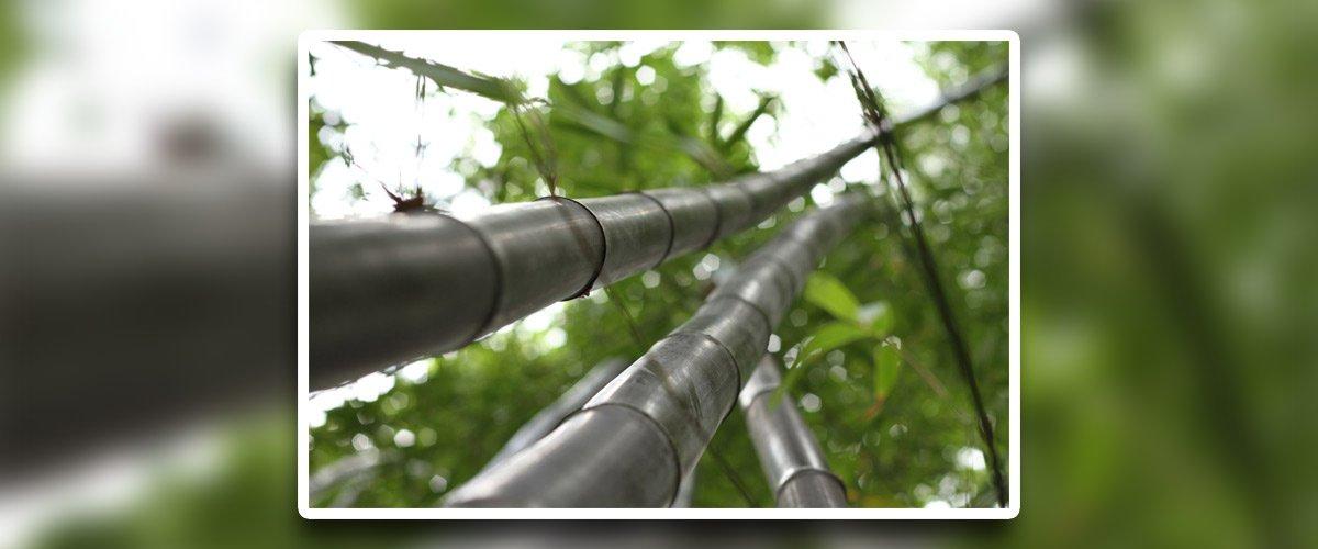 steve smith tree felling bamboo tree