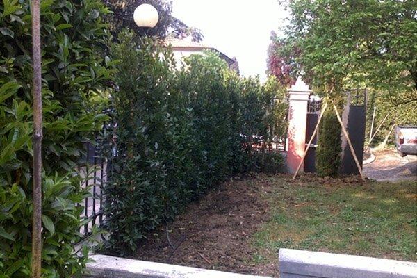 mantenimento giardino