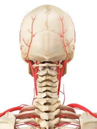 ortopedico pediatria traumatologia