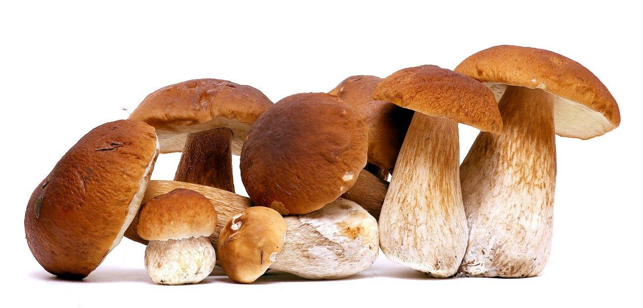 Funghi porcini a Torino