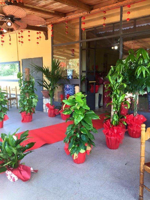 Entrata al ristorante, rosso e verde, legno e bamboo