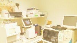 analisi cliniche per animali, sterilizzazione animali, visite oculistiche per animali