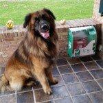 Hond bij AED (Maatschappelijk Verantwoord Ondernemen)