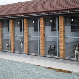 Dog Boarding Kennels Derby