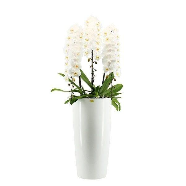 piante e fiori per arredamento interno