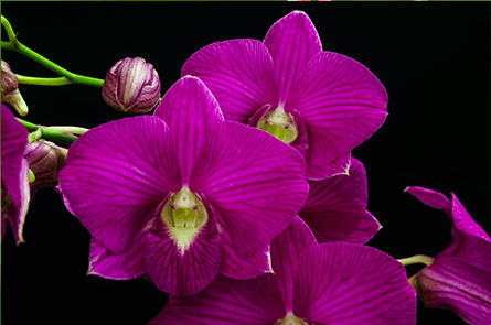 vendita di piante tropicali