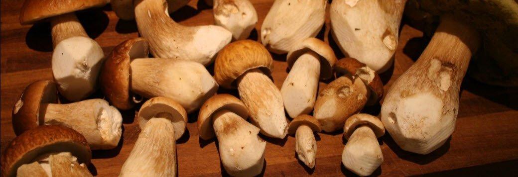 Porchini mushrooms Italian restaurnat chef's ingredient