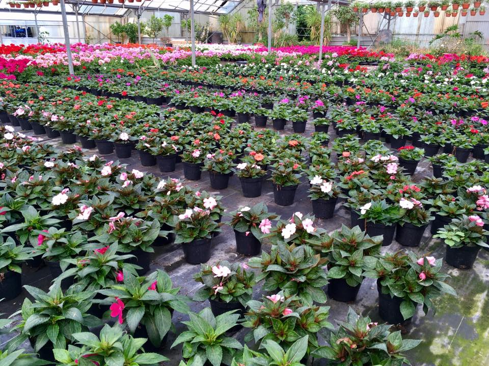 piante in un vivaio