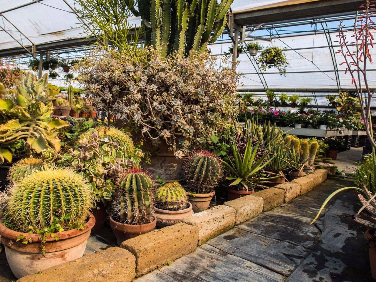piante grasse nella serra