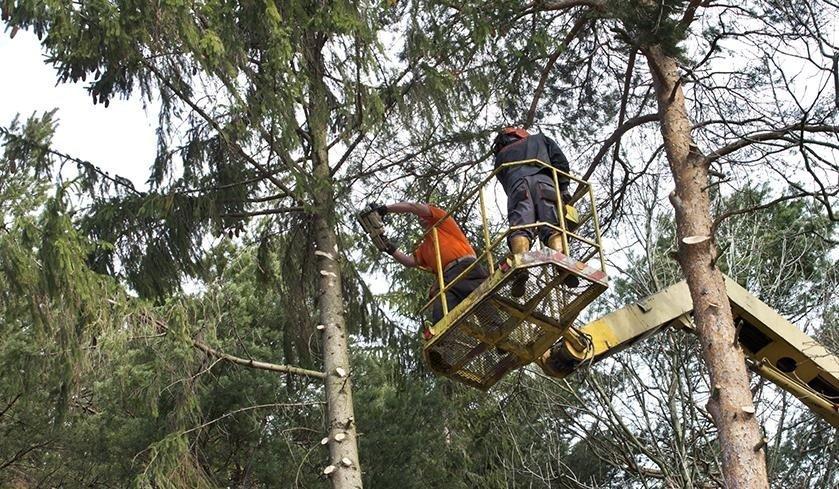 tecnico dentro cestello per potatura alberi