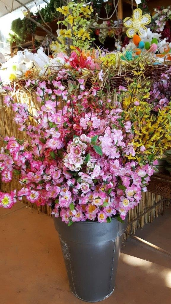 piantine e fiori