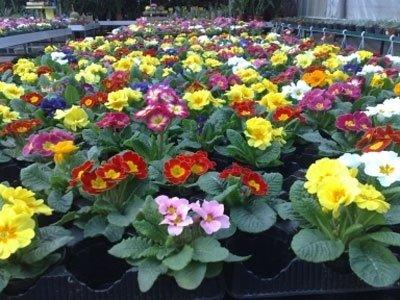 vivaio fiori piante treviso